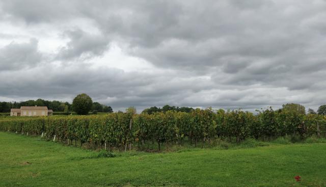 Visitar viñedos en Francia, Bergerac