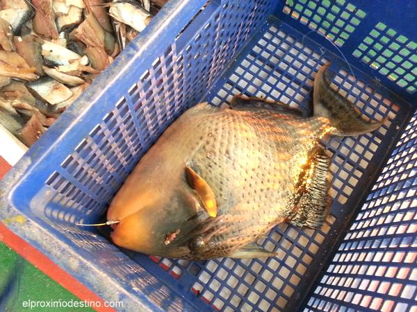 Pesca en Maldivas