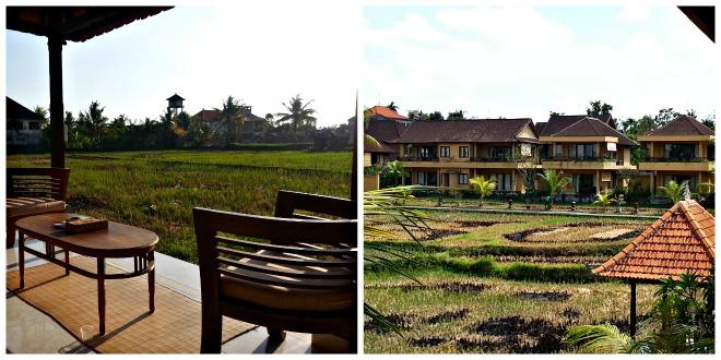 SriBungalows, zona de los arrozales.