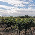 Enoturismo en la Ribera del Duero: visita a las Bodegas Coto de Haza